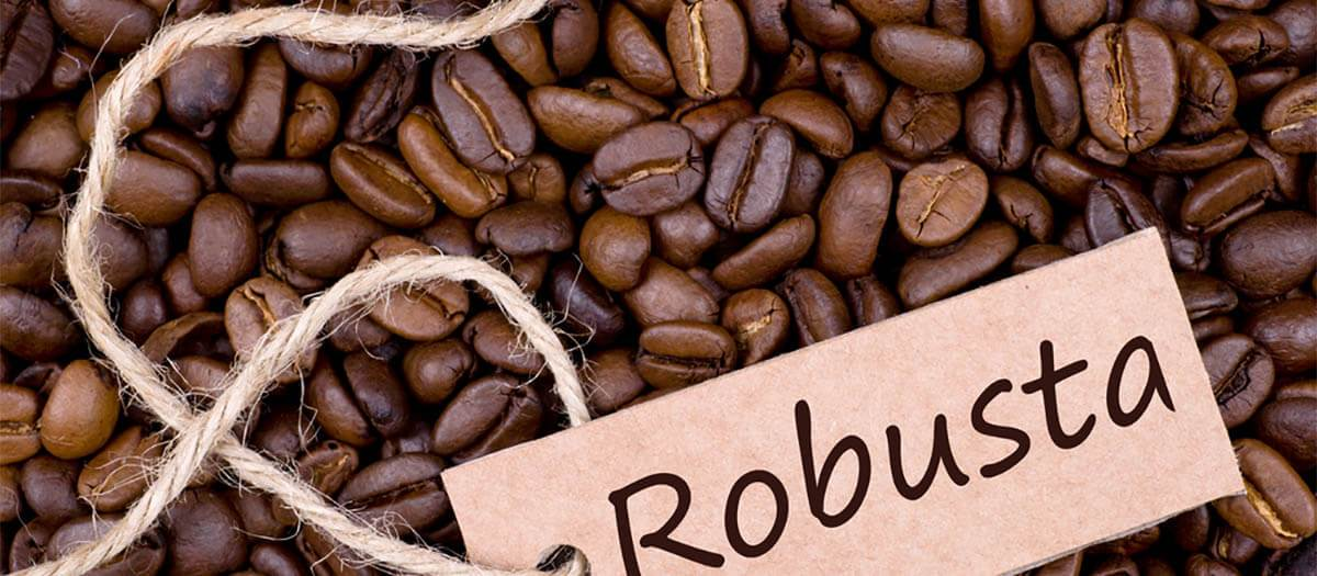 robusta-coffee