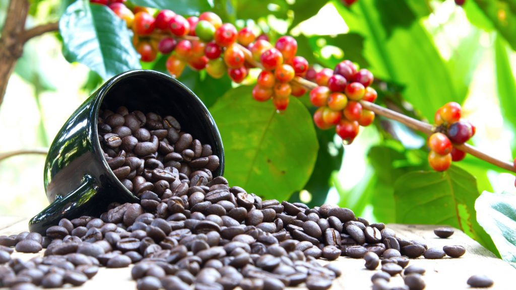 Coffee Plants facts